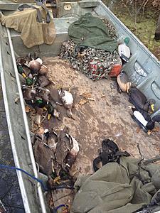 -barpit-ducks-jpg